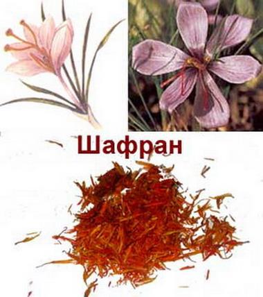 http://rosgosapteka.ru/blog/wp-content/uploads/2010/11/Shafrany.jpg